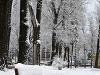 Meteorológovia nás nepotešili, Vianoce budú takmer bez snehu!