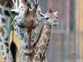 Viedenská zoo je najlepšou v Európe