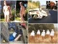 Najväčšie kuriozity roka 2013: Naháč s bimbasom, Bin Ládin v Bystrici či mydlenie barana!