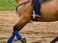 Kôň sa v Tatrách vrátil domov bez jazdca, museli ho hľadať záchranári