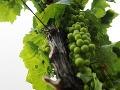 Pohľad na vinice v