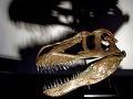 Stretnutie s ním znamenalo smrť: Objavili predátora, ktorý bol postrachom Európy
