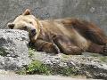 Návštevníci bojnickej zoo zostali zaskočení, dostali varovanie: Z výbehu ušiel medveď