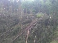Polámané stromy v Starých