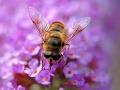 Záchranári v Malej Fatre pomáhali turistovi, takmer ho dostala včela