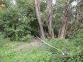 V českom lese vykopali