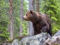 Medveď, ktorý ušiel z bojnickej zoo: Prišiel nekompromisný verdikt, maco musí zomrieť!