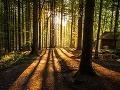 Kniha Tajný život stromov