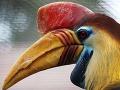 V Bojnickej zoo majú nový exotický prírastok: Jediný na Slovensku