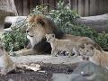 FOTO Nemecká zoo predstavila