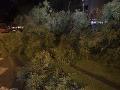 Hasiči odstraňujú zlomený strom na nábreží Dunaja v Bratislave
