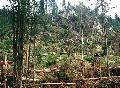 Do Tatier dnes nechoďte: Hory zasiahne silná víchrica, strach z opakovania tragédie z 2004