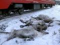 Masaker v Nórsku: Strašné FOTO, za tri dni zomrelo vyše 100 sobov