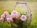 Po kvetoch túži každá