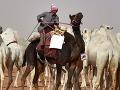Ťavy diskvalifikovali zo súťaže krásy v Saudskej Arábii: To už aj ony si pichajú botox?