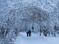 Francúzsko sa pripravuje na snehovú kalamitu: Polovicu krajiny ohrozuje množstvo ľadu