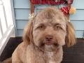 Pes s ľudskou tvárou