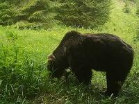 medveď Iwo