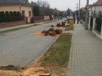 Vyrúbané stromy na uličnej aleji