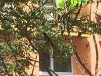 Vrany v okolí bratislavských panelákov