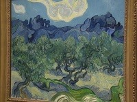 Olivovníky od Van Gogha