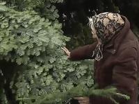 97-ročná babička darovala mestu vianočný stromček, ktorý mala 40 rokov. Vyhŕkli jej aj slzy