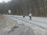 Odchyt vyhodeného psíka