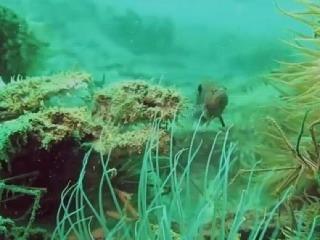 Staroveký podmorský les predpovedá
