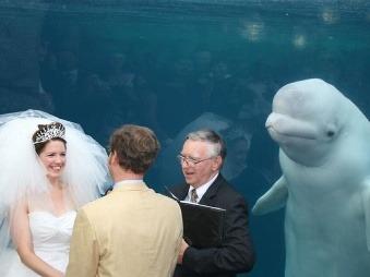 Svadobná FOTO vyvolala ošiaľ: Nevesta mala tú najbizarnejšiu svedkyňu