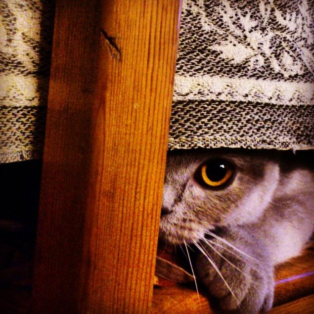 SÚŤAŽ Vaši domáci maznáčikovia