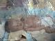 VIDEO Neuveriteľná záchrana mesačného bábätka: Z hrobu ho dostal statočný psík