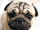 KVÍZ: Len naozajstný milovník psov uhádne všetky plemená len na základe ich ňufáčikov
