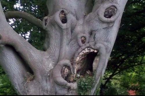 Najstrašidelnejší strom sveta má krivé zuby a vypúlené oči