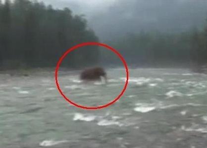Unikátne video: na sibíri mali nájsť vyhynutého mamuta!
