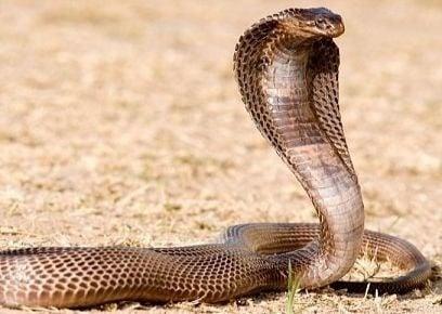 Najnebezpečnejšie zvieratá na svete: