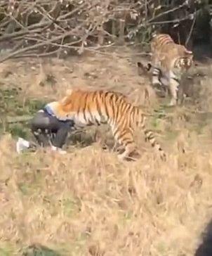 dieta tiger Dicas de Dieta com Fabio Tiger!! - YouTube