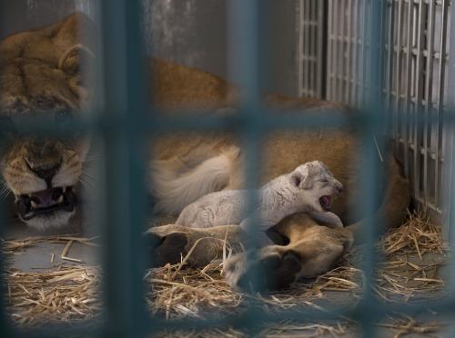 Radosť ochrancov zvierat: FOTO