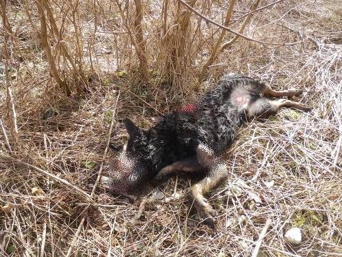 Smutný osud odhodeného psa: