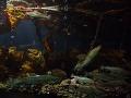 Morské ekosystémy