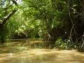 Amazonský dažďový prales