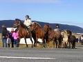 Islandské kone