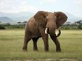 Slon africký v NP