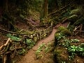 Puzzlewood, Anglicko