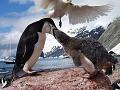 Antarktída: drsné i krásne