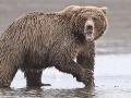 Stretnúť medveďa? Tu je