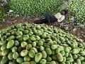 Indický robotník spí na