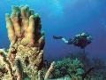 Za krásami podmorského sveta