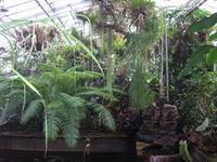 Botanické záhrady