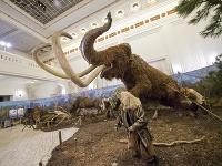 Jedinečná výstava v Bratislave: Spoznajte obrovské zvieratá z ľadovej doby