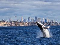 Milovníci delfínov a veľrýb, pozor: Toto sú najlepšie miesta na ich pozorovanie